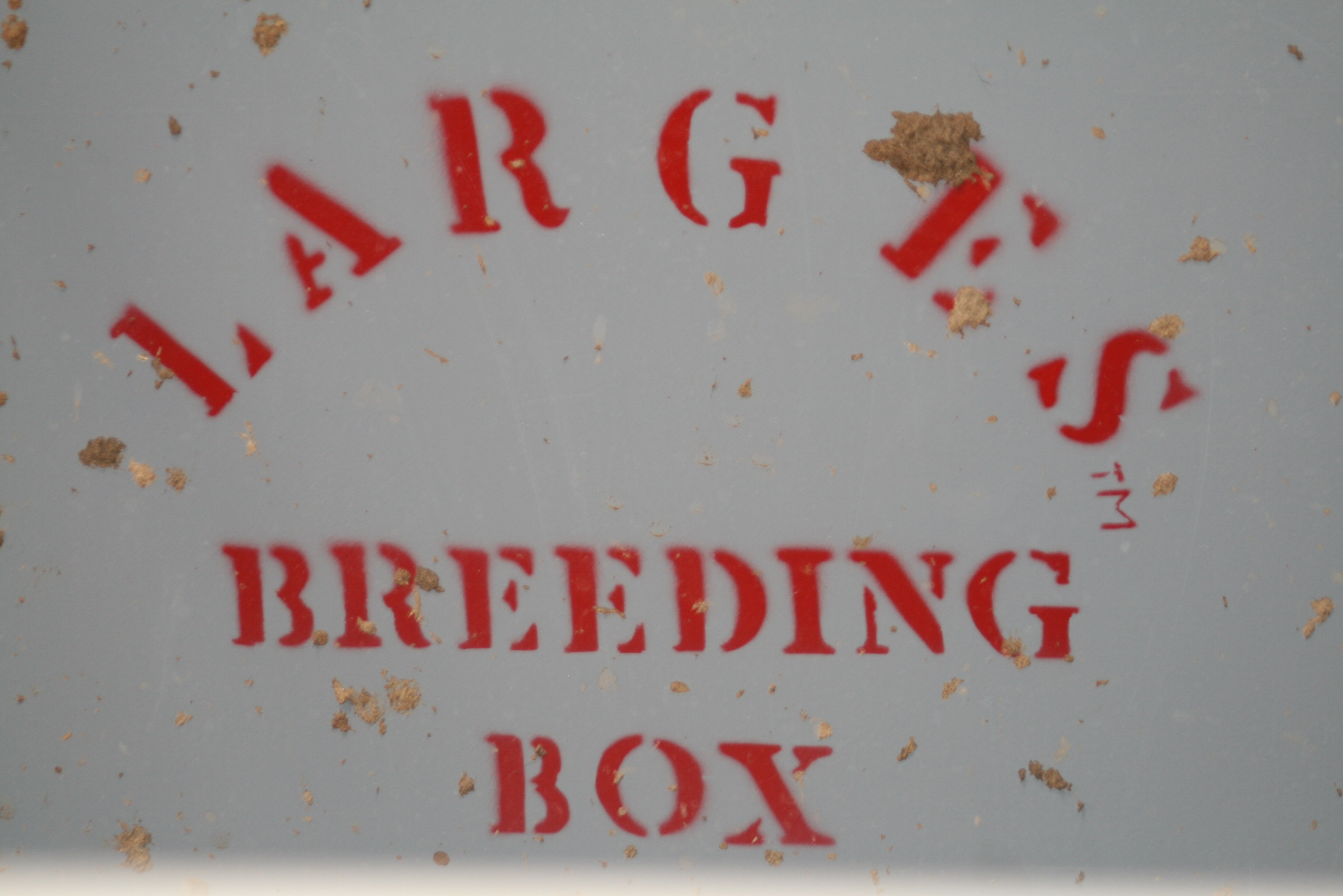 Breeding Box For Cattle The Cattle Come Into The Box