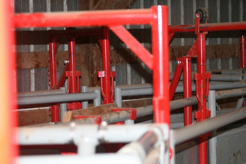 Breeding Box For Cattle Leads to The Breeding Box